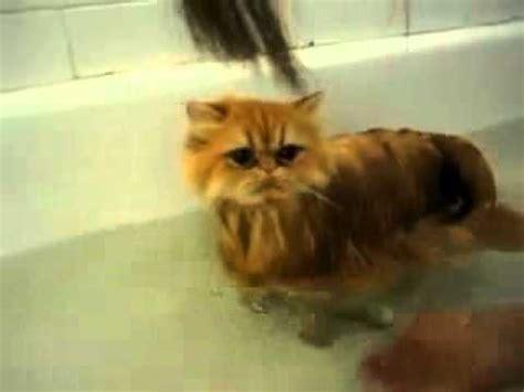 kitten taking a bath must