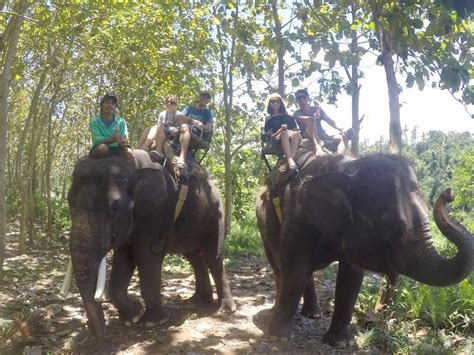 bali elephant ride tour bali elephant ride tour elephant safari ride bali 30