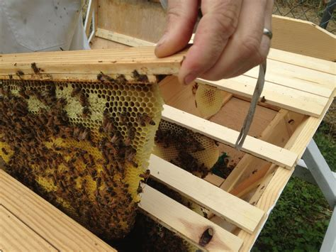 top bar hive frames how beekeeping has made me a better gardener part one