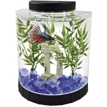 fish tank for desk at work beta fish tank fish tanks