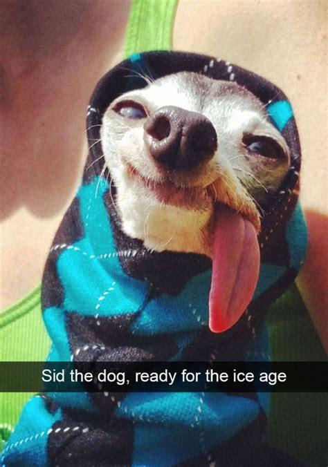 top celebrities dogs dogs are the top celebrities of snapchat 50 pics