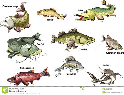 cartoon fish stock vector image 44442390