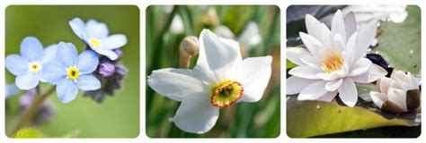 nomi fiori italiani nome etimologia e significato dei fiori nomi dei fiori