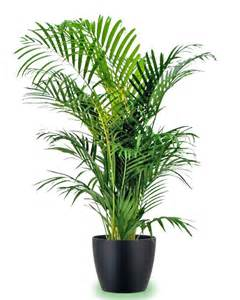 Indoor House Plants by Gallery For Gt Indoor Potted Plants