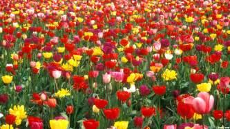 Landscape Pictures Of Flowers Hd Wallpaper Flower Gardens Wallpapersafari