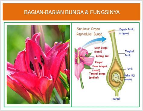gambar macam jenis bunga bagian bunga fungsinya