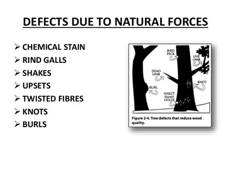 Define Tree timber defects