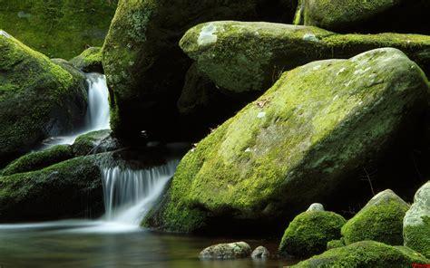 imagenes de paisajes exoticos paisaje exotico moho fondos de pantalla fotos de paisaje