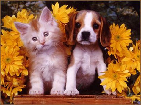 puppies and kittens pictures between dogs and cats hut