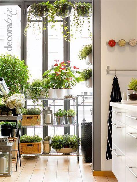 plantas  decorar la cocina