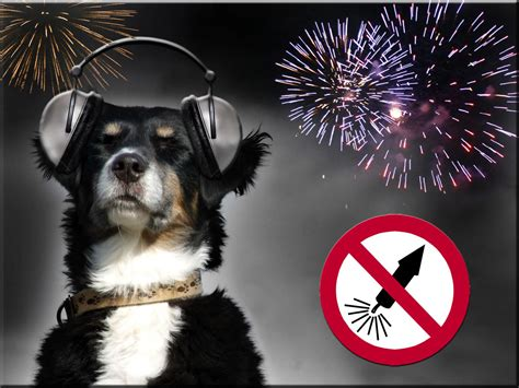 new year for dogs new year s tips for keeping your pets safe canine