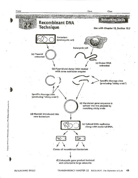 Dna Technology Worksheet by Recombinant Dna Worksheet Photos Dropwin