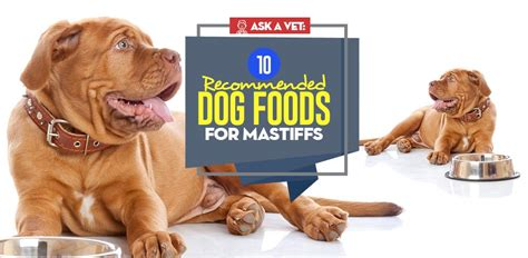 best food for mastiff puppy best food for mastiffs 10 vet recommended brands 2018