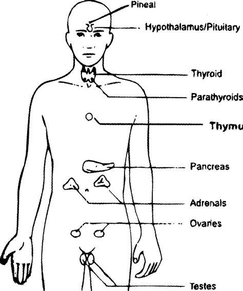 glands in the diagram gland diagram human anatomy organ