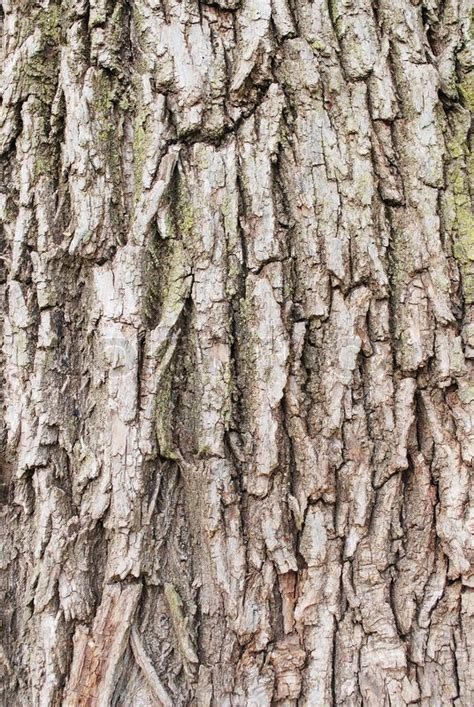 Free Barn Plans willow tree bark texture stock photo colourbox