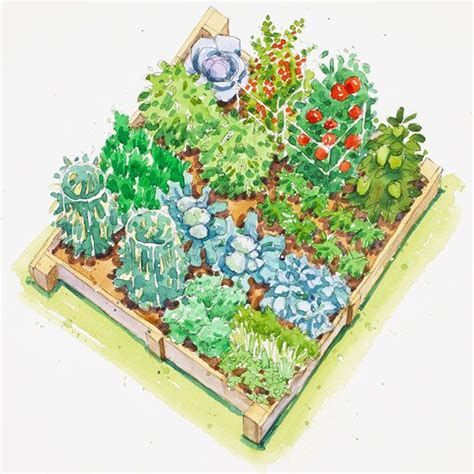 plant  enjoy fall vegetables vegetable garden