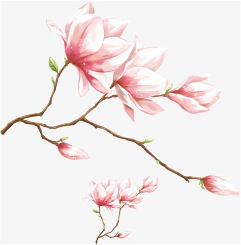 watercolor pink magnolia flower watercolor magnolia