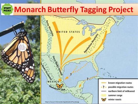 monarch watch migration tagging tagging monarch butterfly tagging project by monarch butterflies