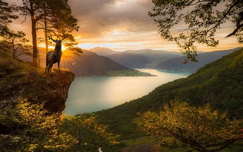 deer sunset fjord mountain trees norway forest