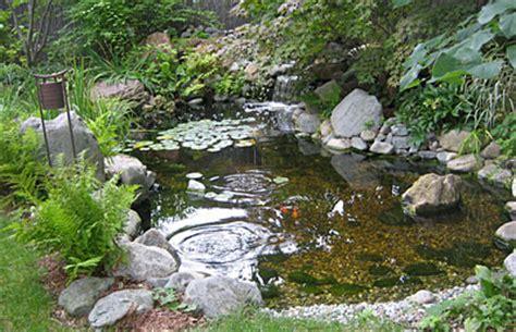 water clear  bird baths  ponds gardener