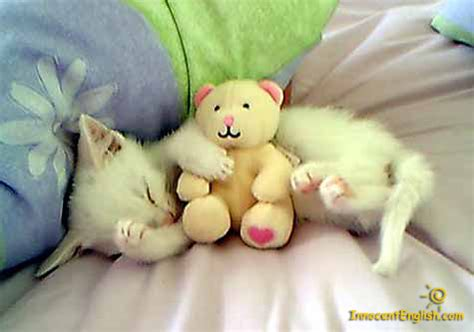 cute puppies and kittens with captions   Katy Perry Buzz