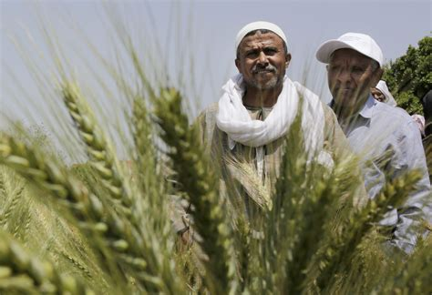 greening  egyptian economy  agriculture middle