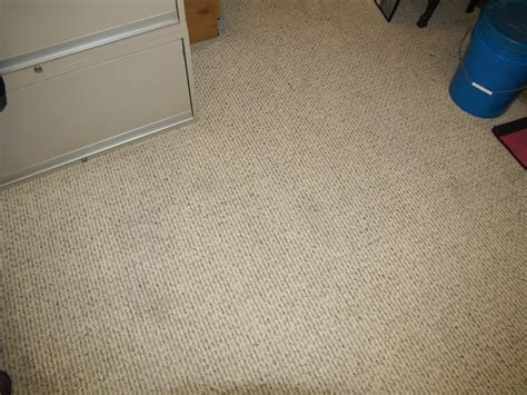 how to remove pet stains and odors from carpet with a