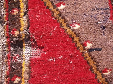 moths in rugs moth damage is better to prevent than repair