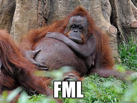 Fml Meme - fml lazy orangutan quickmeme