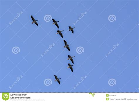 birds fly high stock photo image 45509242