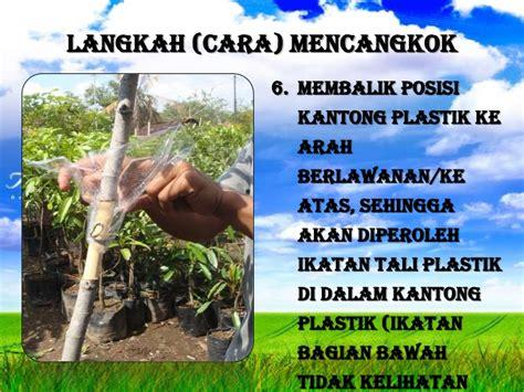 Cangkok Tanaman budidaya tanaman cangkok