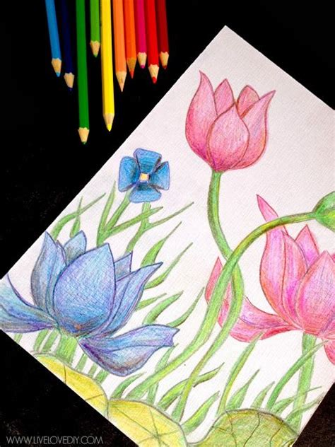 gallery simple colorful pencil drawing gallery