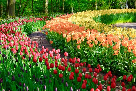 Flowers Of Garden Colorful All Year Flower Gardens Garden Post