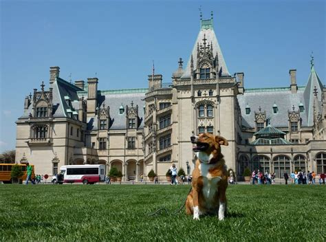 biltmore house hours dog friendly attractions asheville nc continental pet relocation