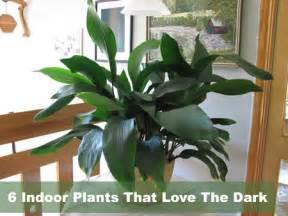 indoor plants no light 6 indoor plants that love the dark