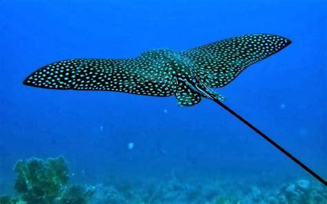 imagenes de animales del mar 138 best animales del mar images on pinterest del mar