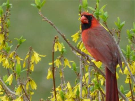 flower bud protection from birds how to keep birds from