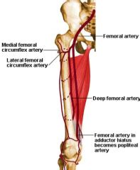 7g Herna the gallery for gt femoral canal