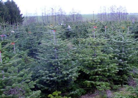 umpferstedt weihnachtsbaum selber schlagen my blog