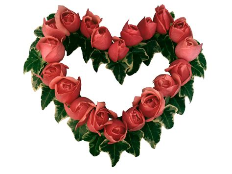 roses and hearts of roses wallpapers and images wallpapers