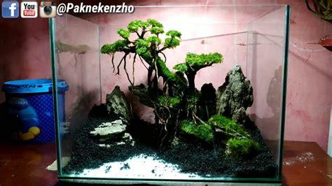 bonsai aquascape buce contoh bonsai