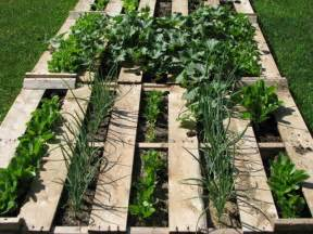 refresh your and mind with pallet vegetable garden