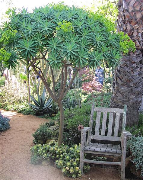 California Backyard Trees by Best 25 California Garden Ideas On