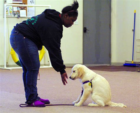 fairbanks dogs fairbanks students help service dogs service certifications