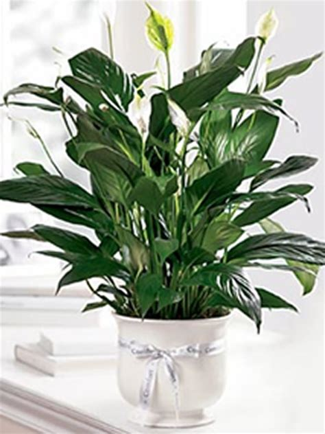 Comfort Planter by Comfort Planter Sudbury Flower Delivery L Lougheed