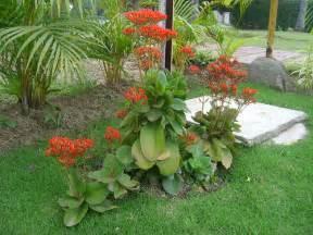 Indoor Flower Plants - kalanchoe blossfeldiana cultivo suelo y riego plantas