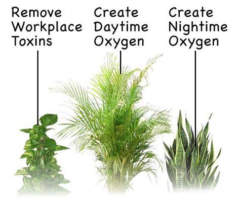 best indoor plants for oxygen top three oxygen producing plants