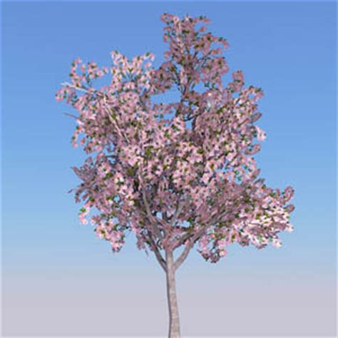 cherry tree 3d free cherry tree 3d model formfonts 3d models textures