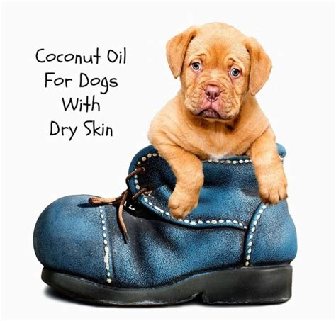coconut for dogs skin coconut for dogs with skin paws right here