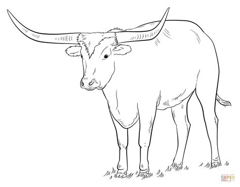 Longhorns Coloring Pages Texas Longhorn Coloring Page Free Printable Coloring Pages